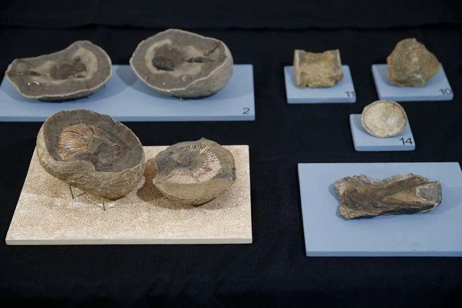 Fósseis encontrados em pesquisas na Antártica, na exposição 'Quando Nem Tudo era Gelo', organizada pelo Museu Nacional e exposta no Centro Cultural Casa da Moeda, no Rio - 16/01/2019