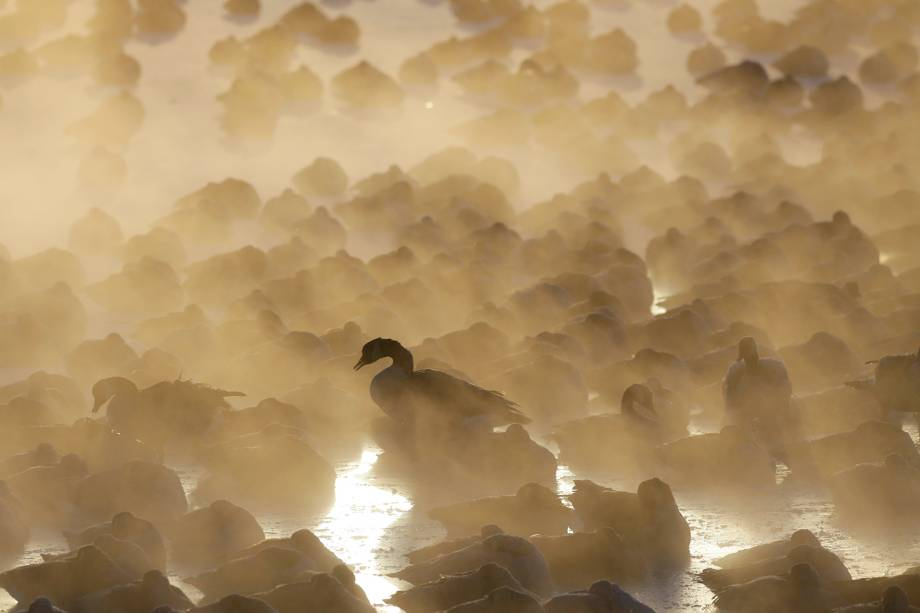 Gansos são vistos em lago de Port Washington, localizado no estado americano de Wisconsin, durante onda de frio que atinge os Estados Unidos - 30/01/2019