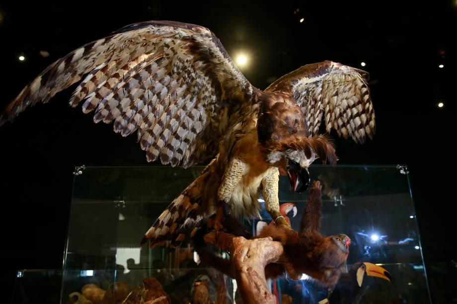 Coleção de aves na exposição 'Museu Nacional Vive - Arqueologia do Resgate' - 25/02/2019