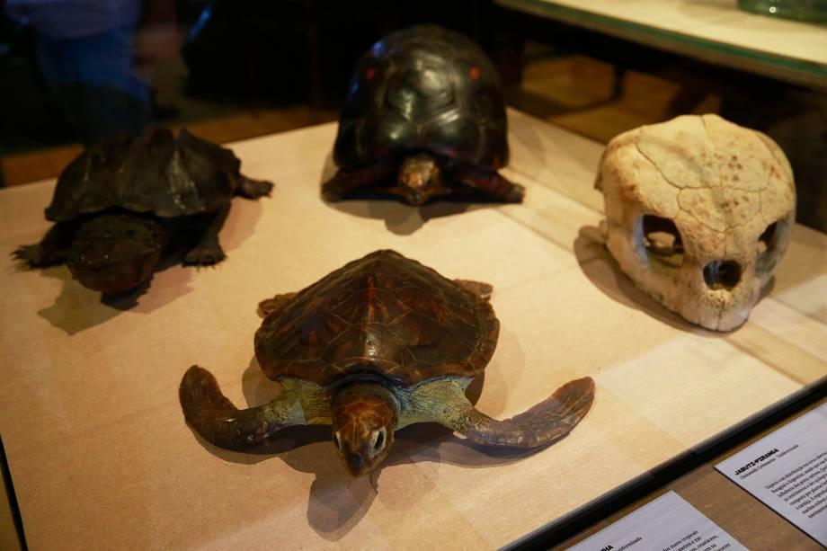 Tartarugas na exposição 'Museu Nacional Vive - Arqueologia do Resgate' - 25/02/2019