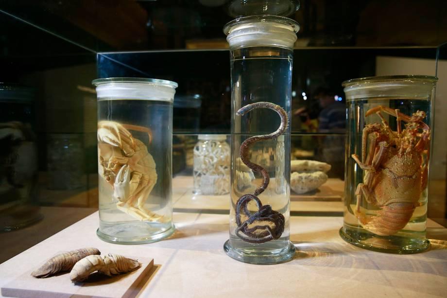 Crustáceos na exposição 'Museu Nacional Vive - Arqueologia do Resgate' - 25/02/2019