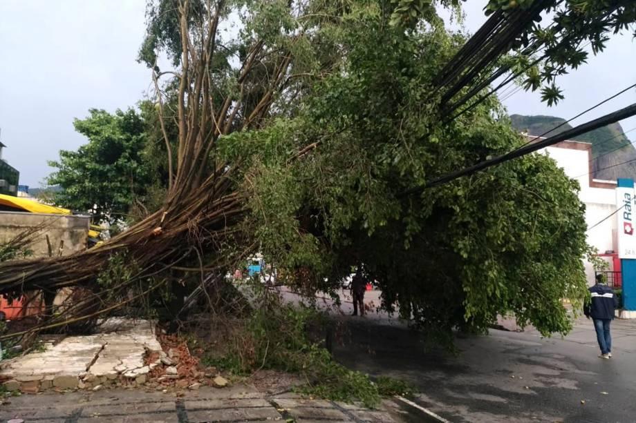 Chuvas provocam quedas de árvore e tapumes na Barra da Tijuca - 07/02/2019