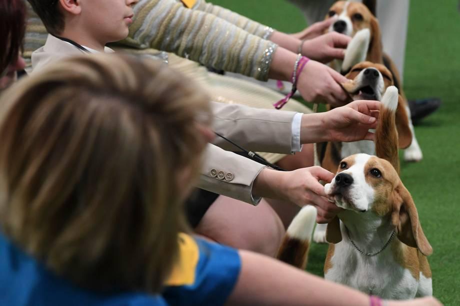 Beagles e seus donos participam de julgamento da raça durante o Westminster Kennel Club Dog Show, realizado em Nova York - 11/02/2019
