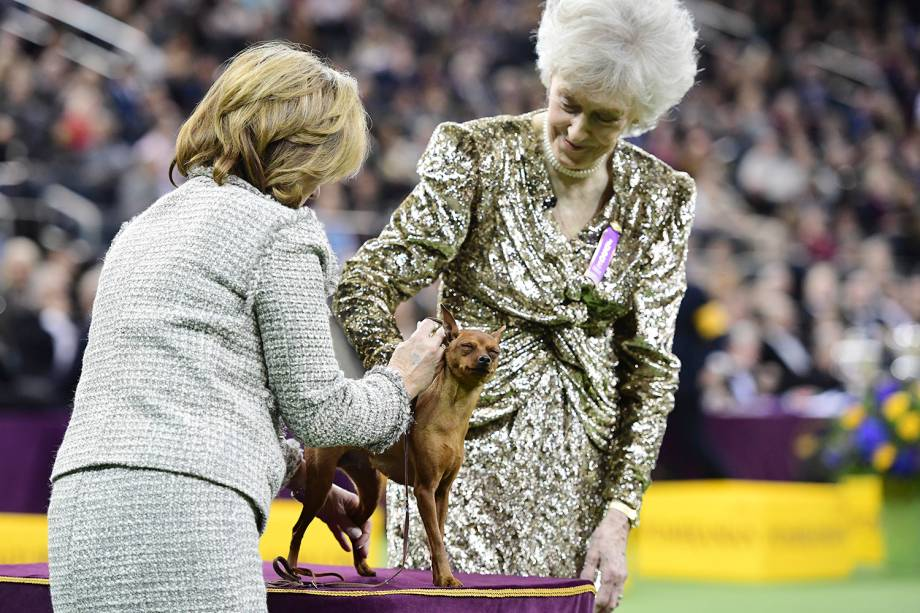 A juíza Sharon Newcomb avalia um Pinscher Miniatura durante o Westminster Kennel Club Dog Show, realizado em Nova York - 11/02/2019