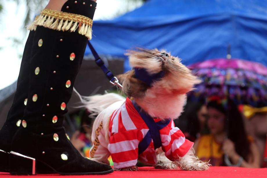 Cães participam do 'Blocão', em praça localizada na Barra da Tijuca, no Rio de Janeiro (RJ) - 02/03/2019