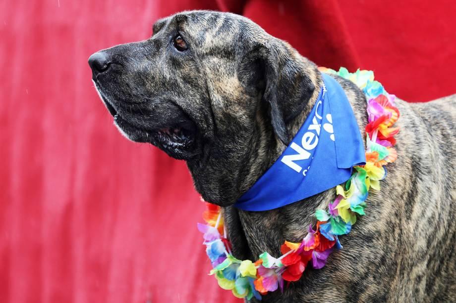 Cães são fantasiados para participar do 'Blocão', na Barra da Tijuca, Rio de Janeiro (RJ) - 02/03/2019