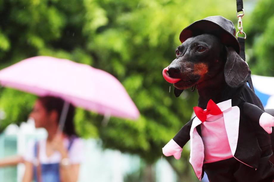 Cães são vistos fantasiados para participarem do 'Blocão', em praça localizada na Barra da Tijuca - 02/03/2019