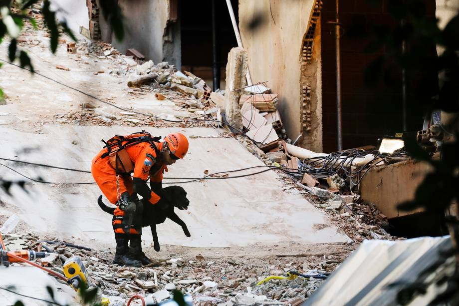Cão farejador auxilia na busca de possíveis vítimas em meio aos escombros após desabamento de prédios em Muzema, no Rio de Janeiro - 13/04/2019