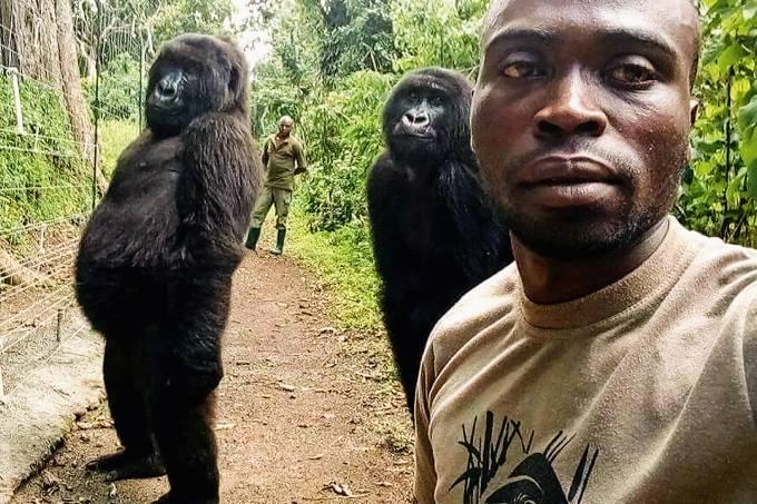Gorilas posam com guardas florestais do parque Virunga