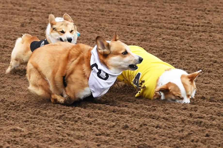 """Cães da raça corgi participam da segunda edição do """"Corgi Nationals"""" - competição realizada na cidade de Arcadia, localizada no estado americano da Califórnia - 26/05/2019"""