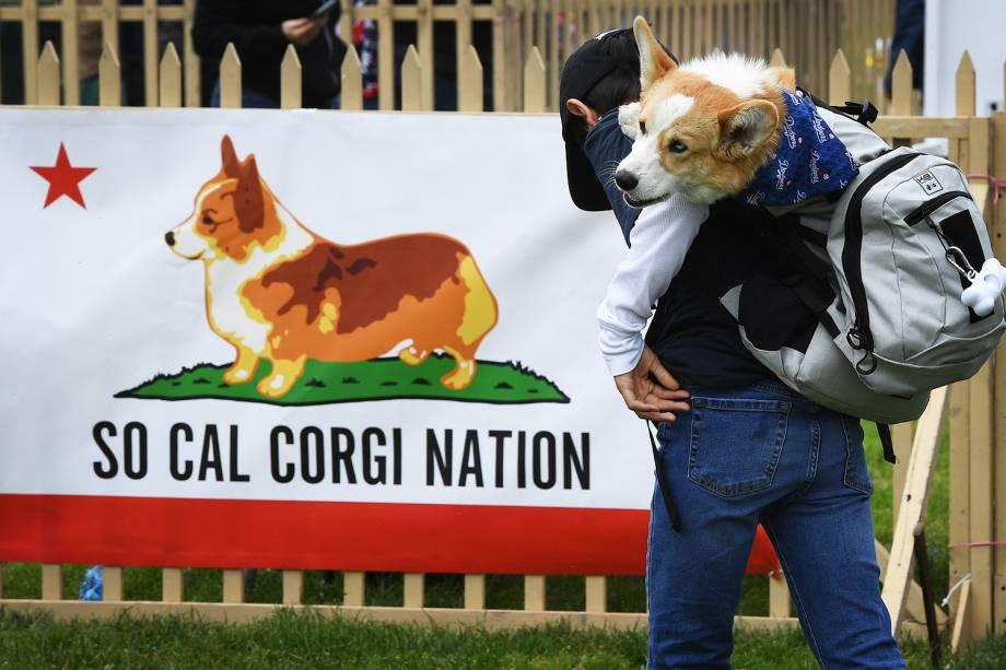 """Cão é visto em mochila com seu dono, durante a segunda edição do """"Corgi Nationals"""" - competição realizada na cidade de Arcadia, localizada no estado americano da Califórnia - 26/05/2019"""