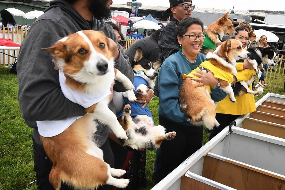 """Cães são colocados em suas posições para disputar corrida durante o  """"Corgi Nationals"""" - competição realizada na cidade de Arcadia, localizada no estado americano da Califórnia - 26/05/2019"""