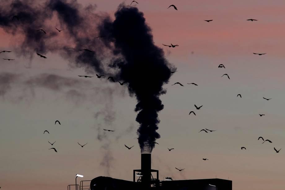 Pássaros sobrevoam a chaminé de uma fábrica em Ludwigshafen, Alemanha