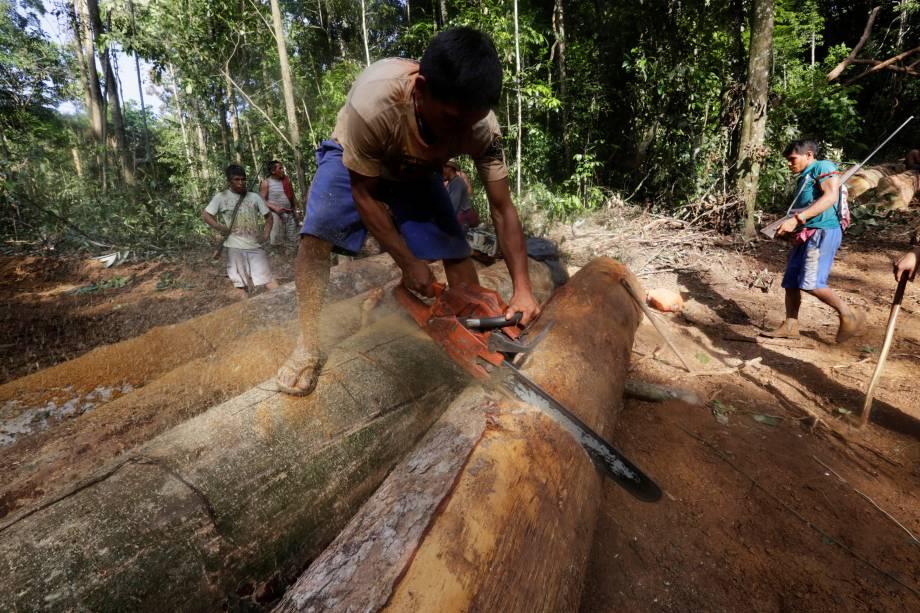Índio Caapore usa uma motosserra para cortar uma das toras encontrada durante expedição para procurar e expulsar madeireiros do Território Indígena Alto Turiaçu, no nordeste do Maranhão