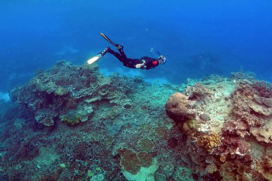 """Homem mergulha em uma área chamada de """"Coral Gardens"""" perto de Lady Elliot Island, na grande barreira de corais, a nordeste da cidade de Bundaberg em Queensland, Austrália"""