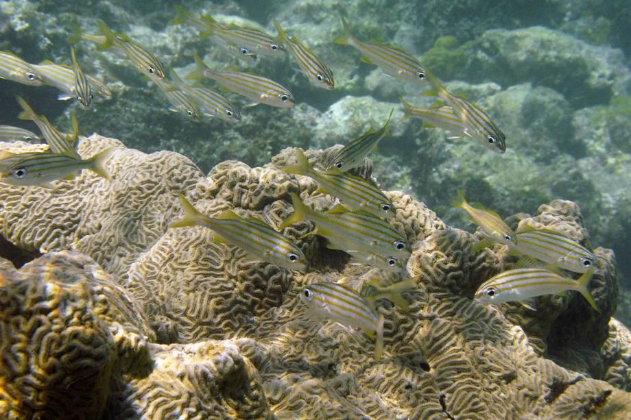 Peixes nadam perto de um recife de corais em Cayo de Agua, no arquipélago Los Roques, Venezuela