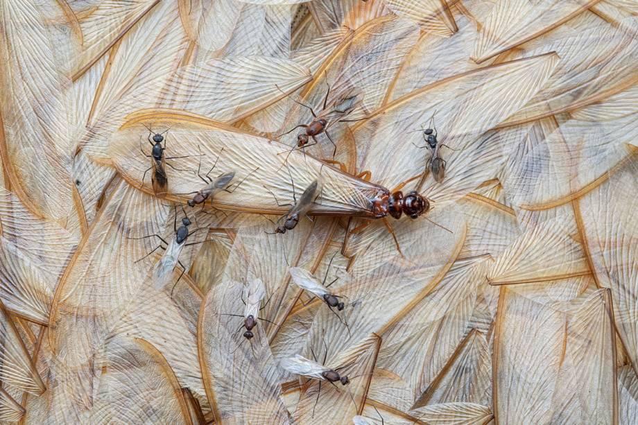 Imagem vencedora na categoria 'Vida com Asas', mostra insetos perdendo suas asas em Moçambique