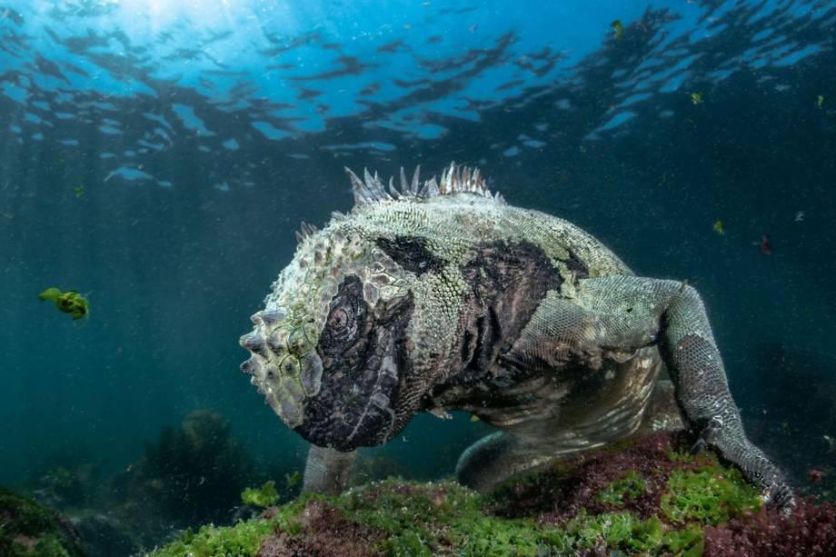Imagem vencedora na categoria 'Vida aquática' mostra iguana em Galápagos, no Equador