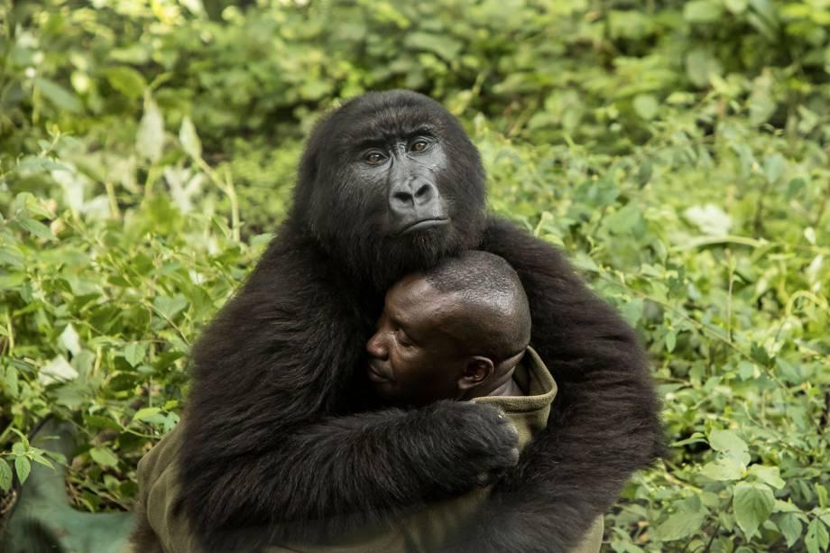 Imagem vencedora da categoria 'Humanos e Natureza', mostra gorila abraçando guarda florestal no Parque Nacional Virunga, localizado na República Democrática do Congo