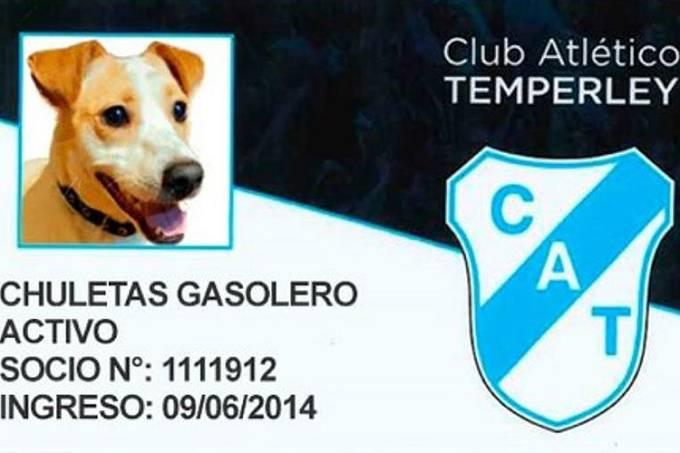 Cães e gatos podem ser tornar sócios-torcedores de time argentino