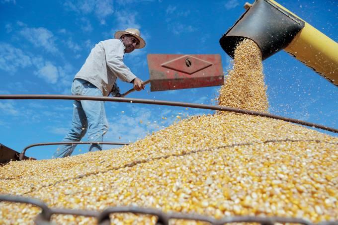 Safra ser· maior por conta do milho