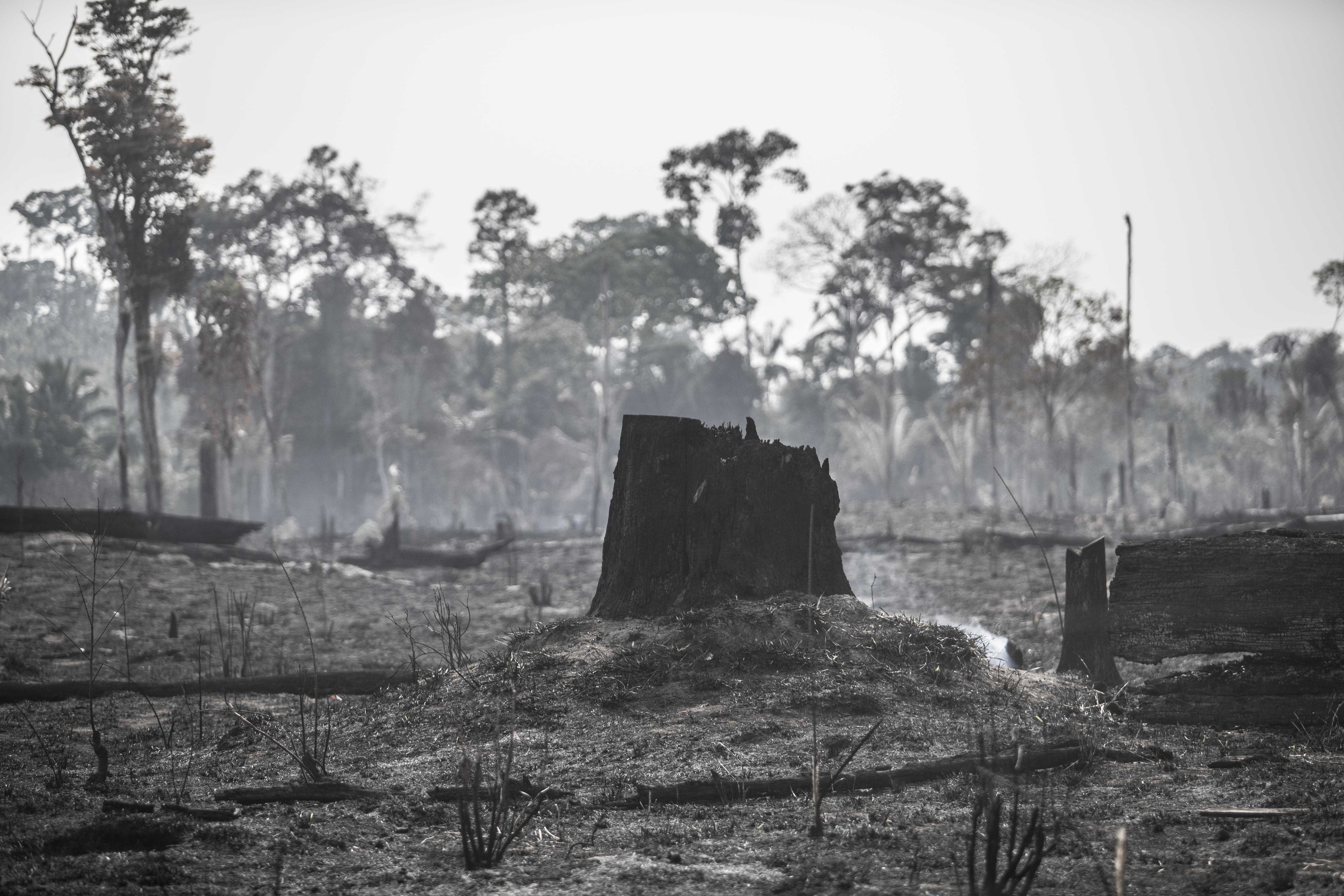 Bolsonaro mente enquanto a Amazônia pega fogo