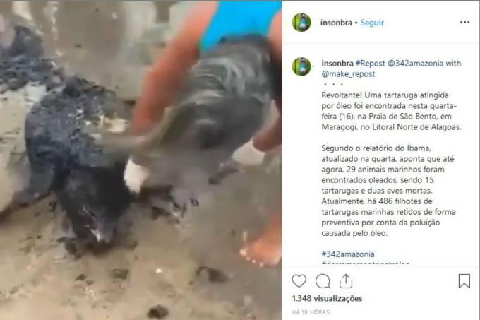Tartaruga Instagram