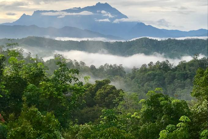 Floresta contínua em Bornéu