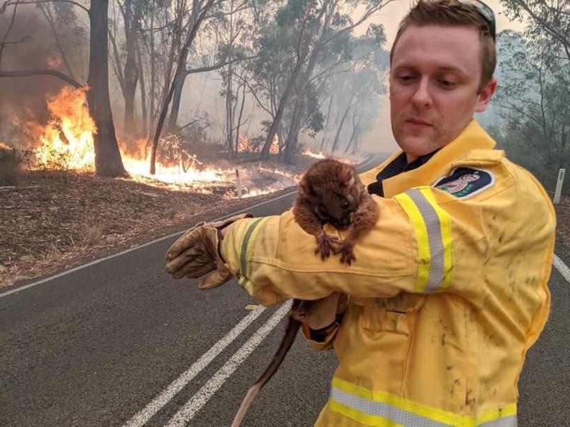 Um voluntário segura um animal resgatado das chamas, na Austrália