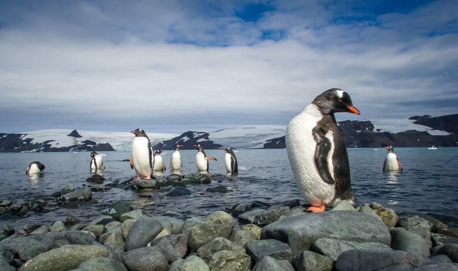 Pinguins em região próxima à Estação Antártica Comandante Ferraz, do Brasil