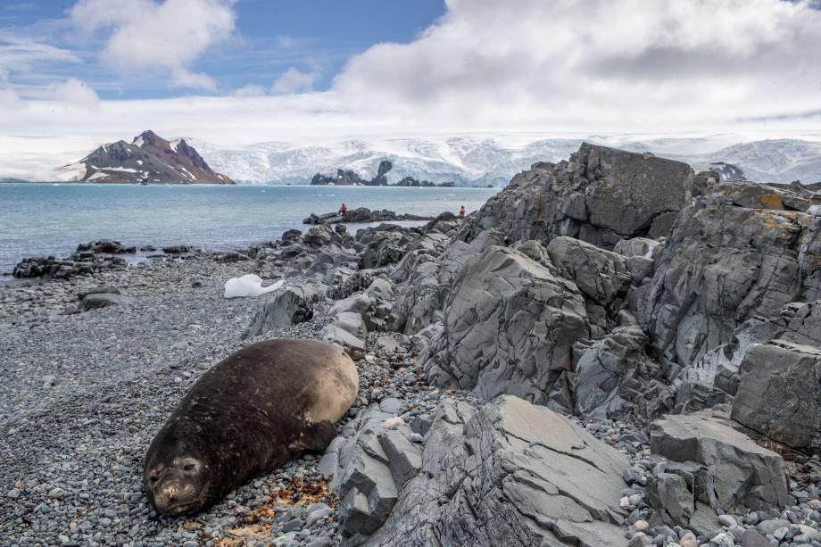 Um elefante-marinho fêmea descansava tranquilamente a alguns quilômetros de distância da base