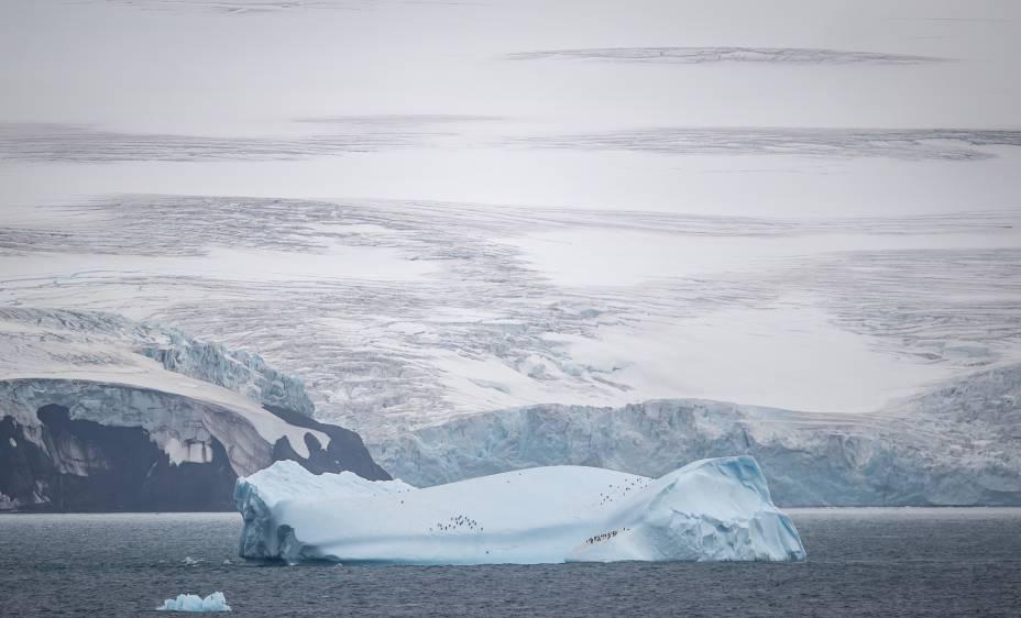 Nas Geleiras de Nelson, na entrada para a Península Antártica, pinguins foram flagrados em cima de um iceberg