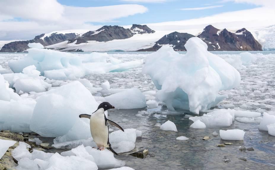 Pinguim em blocos de gelo