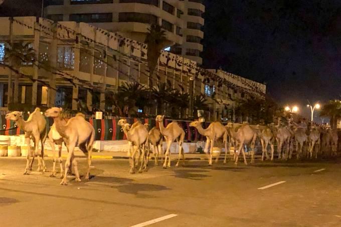 Camelos andando na Líbia