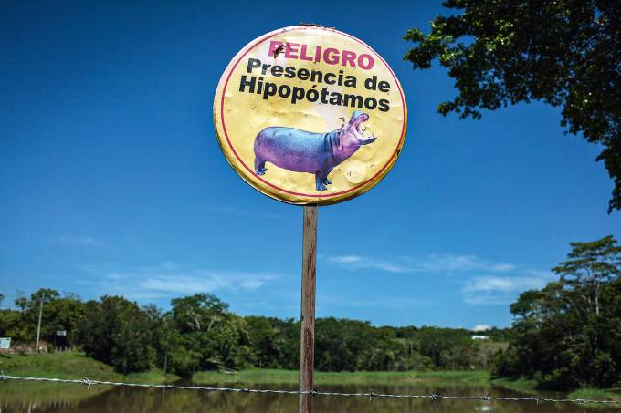 hipopotamos-perigo