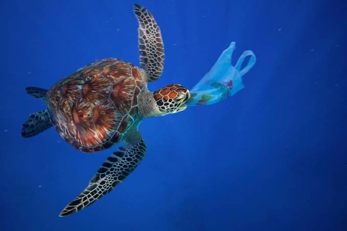 Tartaruga plástico
