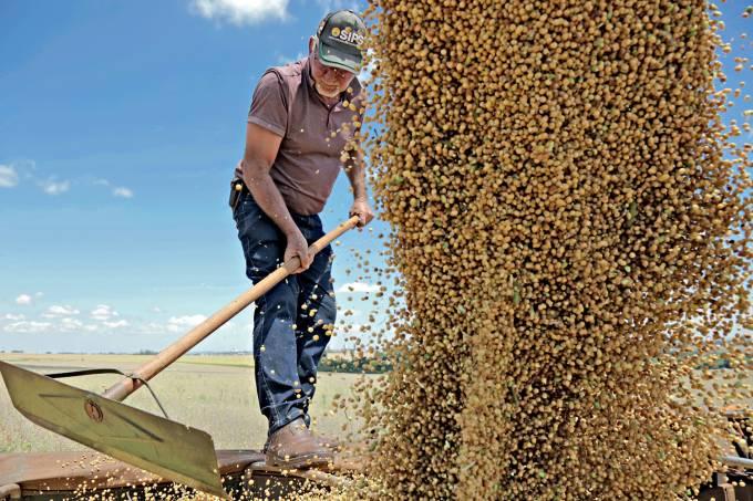 MÈdias altas animam produtores de soja