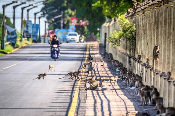 Tailândia Turismo Macacos Coronavírus