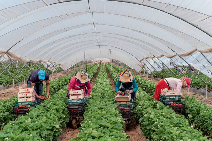Migrant Farm Workers In Lepe