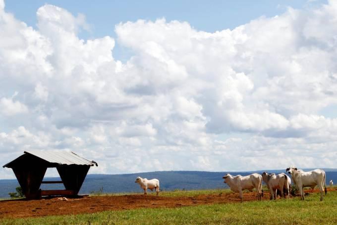 Cattle Ranching in Serra de Ricardo Franco State Park in BrazilCriação de Gado no Parque Estadual Serra de Ricardo Franco no Mato Grosso
