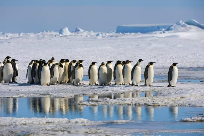 Antarctica, Weddell Sea, Snow Hill Island, Group Of Emperor