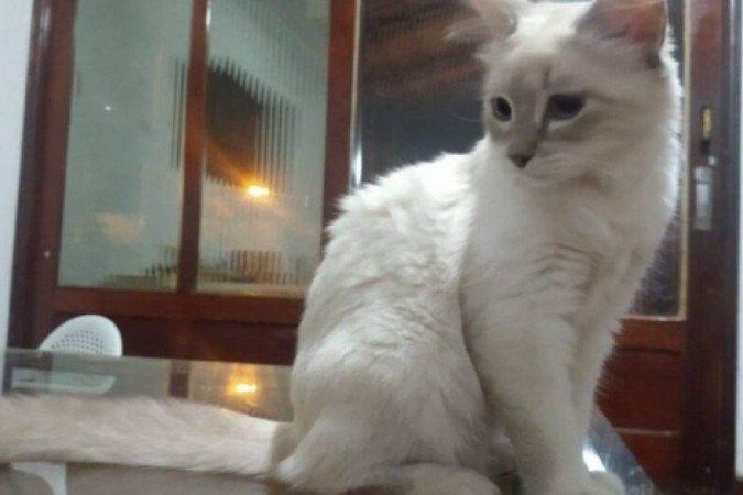 Gato Covid
