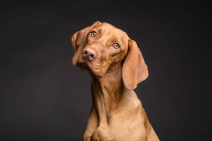 dog-3277416_1920