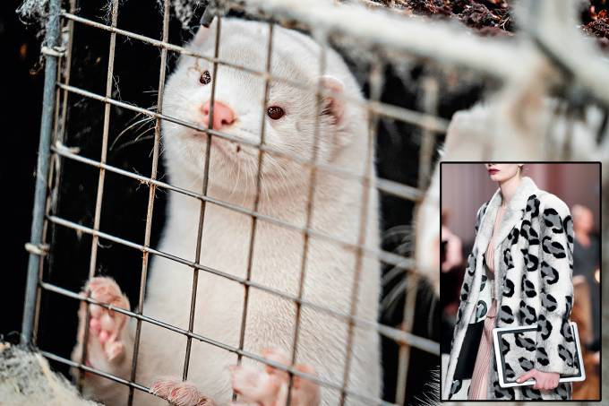 Denmark mink culling process