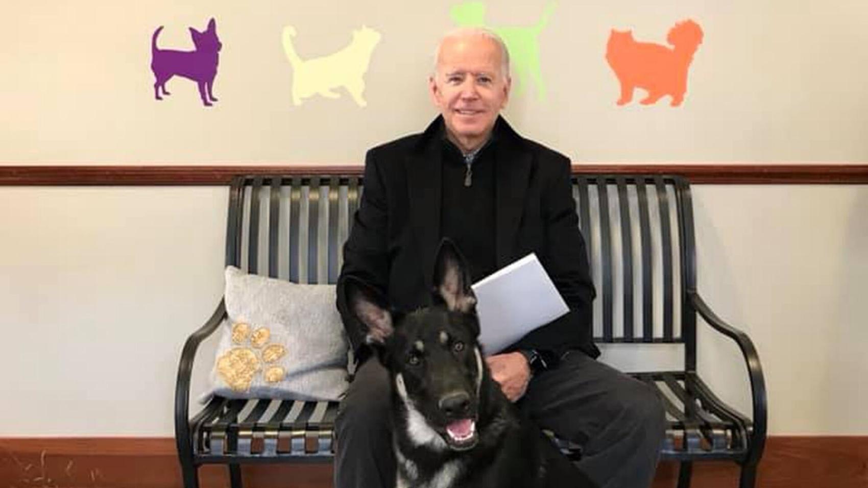 Vitória de Biden restaura tradição de 'Primeiro Cão' da Casa Branca   VEJA