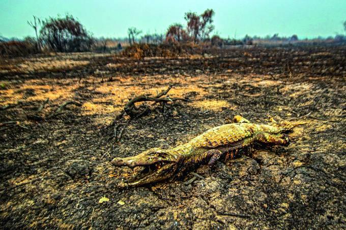 Decenas de animales muertos son vistos en las quemadas del Pantanal brasileÒo