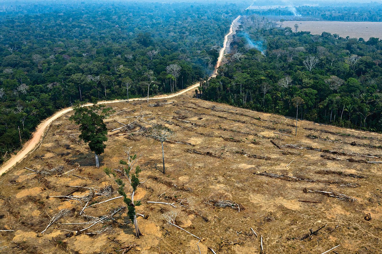 FERIDA - Área desmatada na Amazônia: o mundo exige que o governo resolva o problema já -