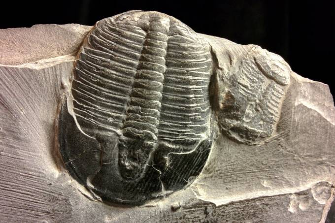 fossil-1191738_1920