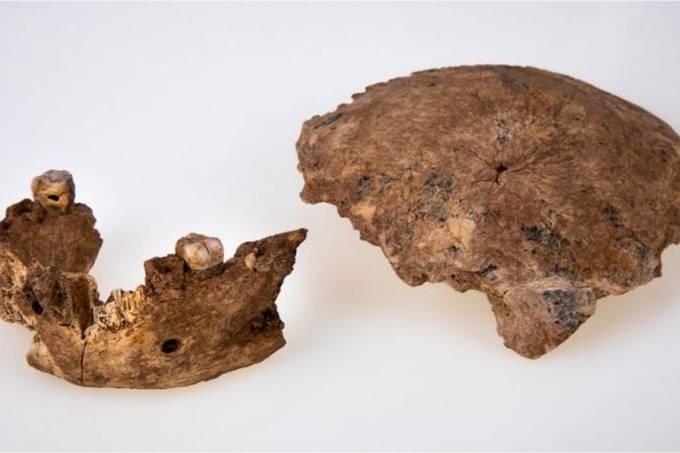 cranio-mandibula