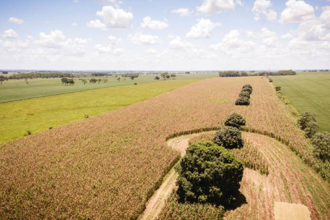 (EDITORS NOTE: Image taken with drone) Aerial view of a corn